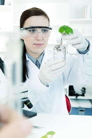 transgenic: study of genetic modified GMO plants in the laboratory