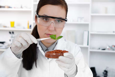 study of genetic modified GMO plants in the laboratory. Stock Photo