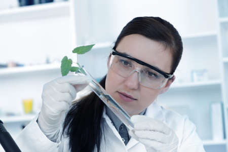 genetically modified crops: study of genetic modified GMO plants in the laboratory. Stock Photo
