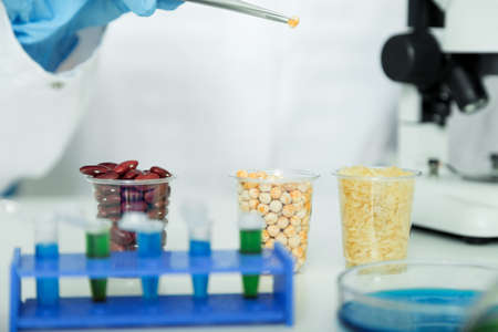 laboratory equipment: Corn subject to selection in Microbiological laboratory Stock Photo