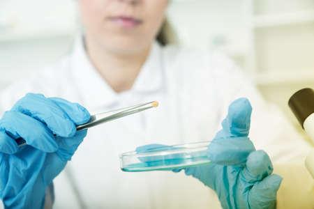 食品の品質の研究室で女性研究所助手 写真素材 - 43057247
