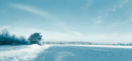 Winter landscape panorama - forest and snow.Toning image.