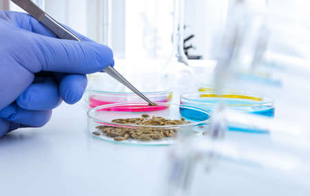 assay: Laboratory assistant in the laboratory of of food quality.Cell culture assay to test genetically modified seed.Toning image