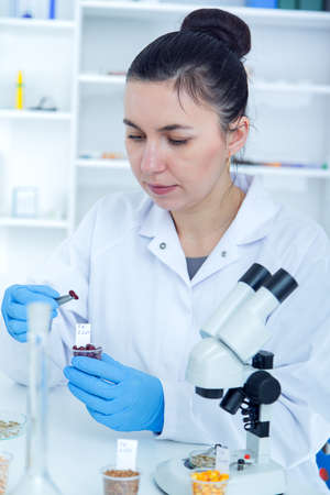 genetically modified crops: Laboratory assistant in the laboratory of of food quality.Cell culture assay to test genetically modified seed.Toning image