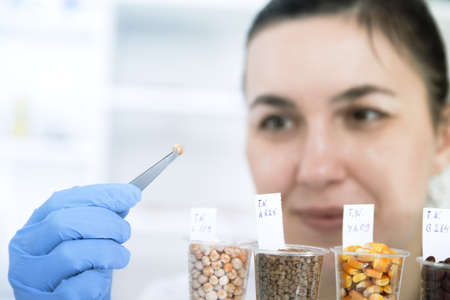 genetically: Laboratory assistant in the laboratory of of food quality.Cell culture assay to test genetically modified seed.Toning image