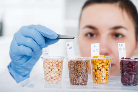Laboratory assistant in the laboratory of of food quality.Cell culture assay to test genetically modified seed.Toning image