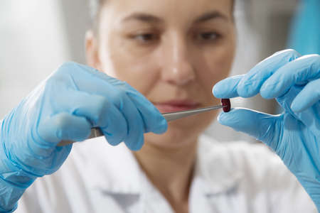 assay: Laboratory assistant in the laboratory of of food quality.Cell culture assay to test genetically modified seed Stock Photo