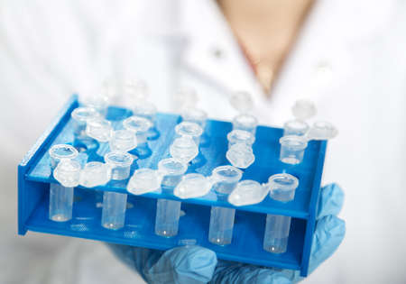Laboratory assistant in the of food quality.Cell culture assay to test genetically modified seed