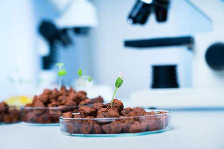 Modern Laboratory .Vegetables in hydroponics  tech picks.
