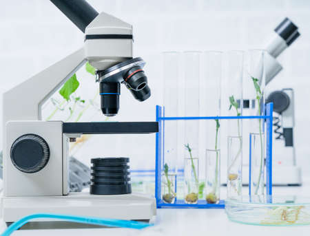 Planta genéticamente modificada probada. Laboratorio de ecología que explora nuevos métodos de fitomejoramiento.