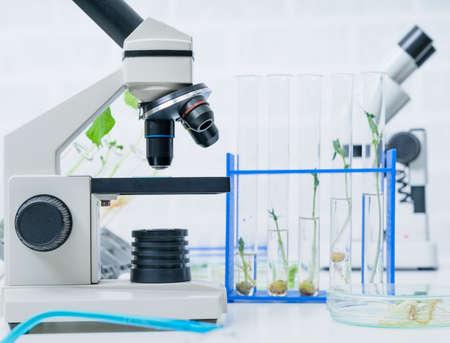 Plantes génétiquement modifiées testées. Laboratoire d'écologie explorant de nouvelles méthodes de sélection végétale.