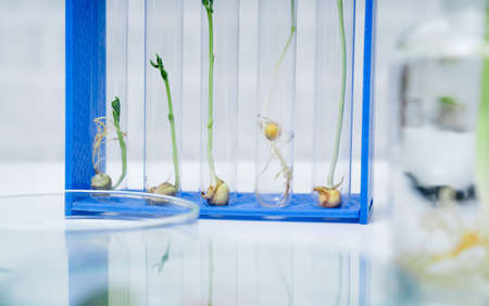 Genetically modified plant tested  .Ecology laboratory exploring new methods of plant breeding.