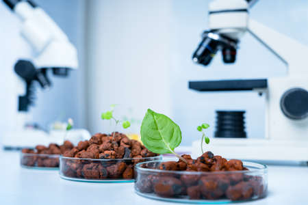 Genetically modified plant tested .Ecology laboratory exploring new methods of plant breeding..Modern Laboratory .Vegetables in hydroponics tech picks
