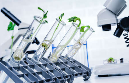 Genetically modified plant tested .Ecology laboratory exploring new methods of plant breeding. Banque d'images