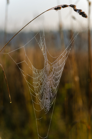 A large web with large holes is covered with drops of dew against the background of dawn