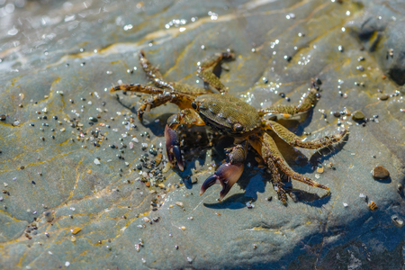 Small crab crawling on the large stones on the sea beach