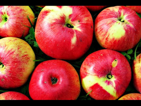 sweet grass: Sweet juicy apples as background screensaver on grass.