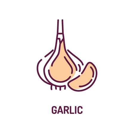 Garlic color line icon. Natural vegetable sign. Spice for cooking. Healthy, organic food concept. Cooking ingredient. Pictogram for web page, mobile app. UI UX GUI design element. Editable stroke. Foto de archivo - 134583388