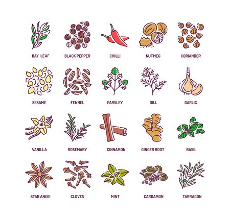 Spices and herbs color line icons set. Seasonings: ground pepper, fennel, cinnamon, cloves, ginger, Cooking ingredient. Pictogram for web page, mobile app, promo. Editable stroke. Çizim