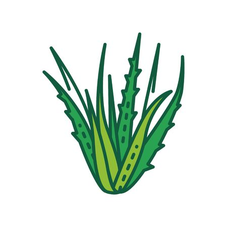 Aloe plant color line icon. Plant that used both internally and externally on humans as folk or alternative medicine. Pictogram for web page, mobile app, promo. UI UX GUI design element. Editable stroke. Çizim