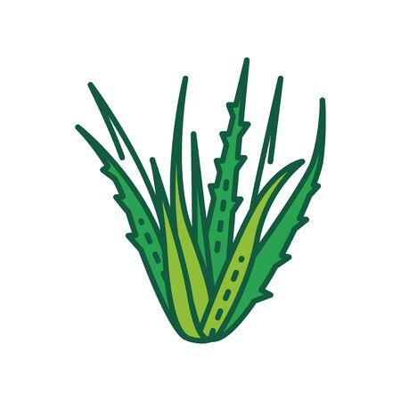 Symbol für die Farblinie der Aloe-Pflanze. Pflanze, die sowohl innerlich als auch äußerlich beim Menschen als Volks- oder Alternativmedizin verwendet wird. Piktogramm für Webseite, mobile App, Promo. UI UX GUI-Designelement. Bearbeitbarer Strich.