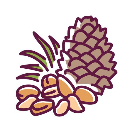 Pine nuts color line icon. Edible seeds of pine trees. One of the more expensive nuts on the market. Pictogram for web page, mobile app, promo. UI UX GUI design element. Editable stroke