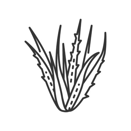 Aloe plant black line icon. Plant that used both internally and externally on humans as folk or alternative medicine. Pictogram for web page, mobile app, promo. Editable stroke.
