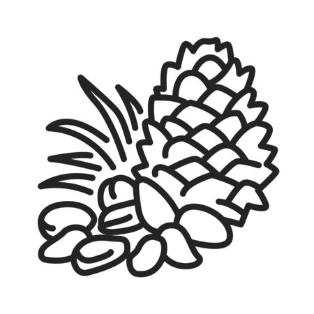Pine nuts black line icon. Edible seeds of pine trees. One of the more expensive nuts on the market. Pictogram for web page, mobile app, promo. UI UX GUI design element.  イラスト・ベクター素材