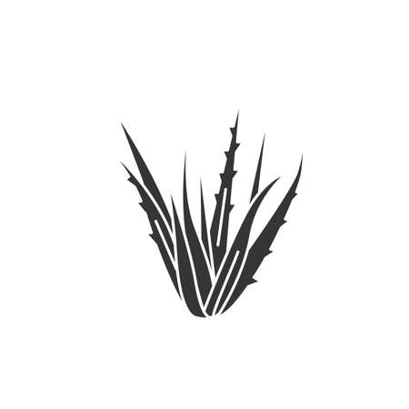 Aloe plant black glyph icon. Plant that used both internally and externally on humans as folk or alternative medicine. Pictogram for web page, mobile app, promo.