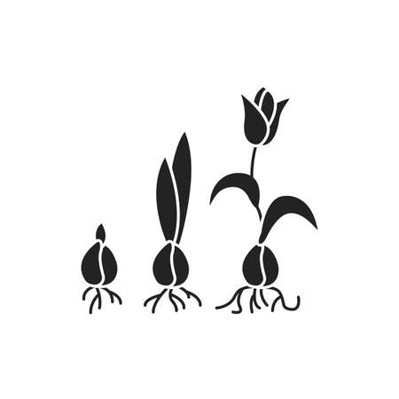 Growing plant stages black glyph icon. The seed, germination, growth, reproduction, pollination, and seed spreading. Pictogram for web page, mobile app, promo