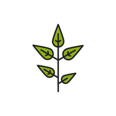 Matcha plant color line icon. Pictogram for web page, mobile app, promo.
