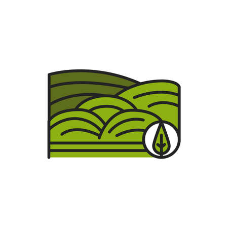 Matcha plantation color line icon. Pictogram for web page, mobile app, promo.