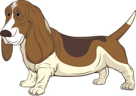 A pet dog. Vector image on white background.
