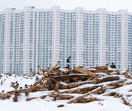 Human activity and nature. Rooks returned from wintering and sit on felled trees against the backdrop of a multi-storey new building. People built housing for themselves and deprived the shelter of birds. Stock Photo