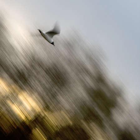 swiftly: Fast gull bird swiftly attacks. A dynamic scene.