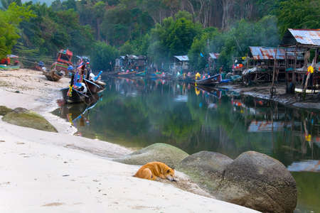 Patong, Thailand, February 2, 2017: A red dog lies on the sand in the background of a Thai fishermens settlement.