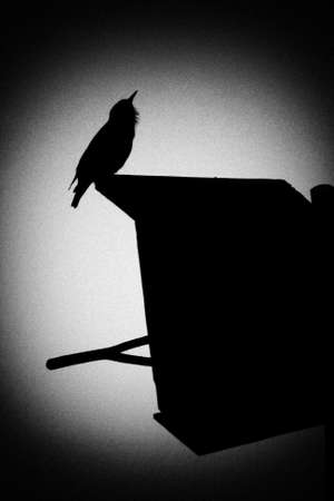 A Starling Silhouette That Sings A Spring Song. Illustration. Stock Photo,  Picture And Royalty Free Image. Image 77785780.
