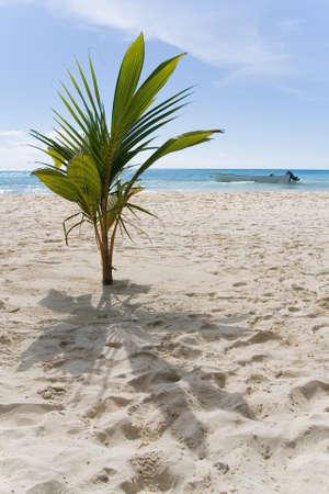 エキゾチックな植物は、砂浜の海岸に生えています。背景に海とモーター ボートがあります。ハイチ島の海岸。ドミニカ共和国の。 写真素材