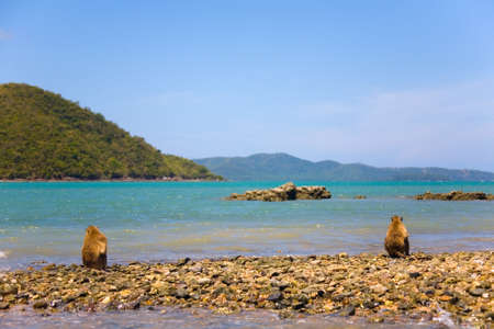 Two monkeys sit on the shore of the ocean in Thailand. Stock Photo