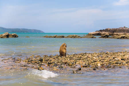 A lonely wild monkey sits on the shore of the ocean. Exotics. Reklamní fotografie - 87523521