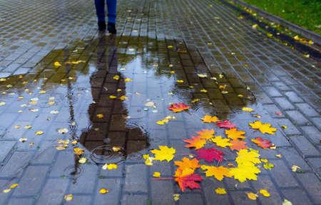 Herbstregen. Gefallene Blätter in einer Pfütze mit einer Reflexion eines Mannes und eines Regenschirms.