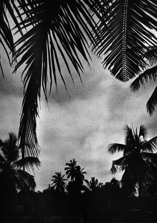 Silhouettes of palm trees against the backdrop of a gloomy sky. Attention! The image contains granularity and other artifacts of analog photography! Stock Photo
