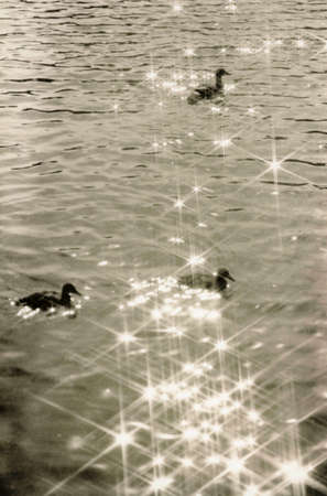 Ducks and glare of the sun on the surface of the water. Attention! The image contains granularity and other artifacts of analog photography!