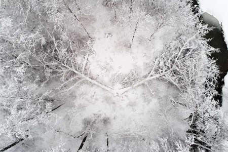 부러진 나무는 눈으로 덮여 있습니다.