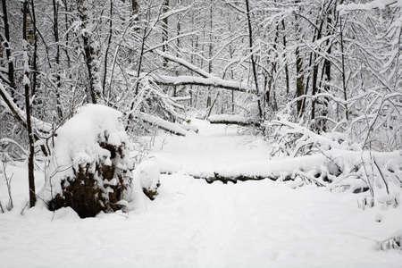 Fallen trees lie across the path. windbreak. Stock Photo