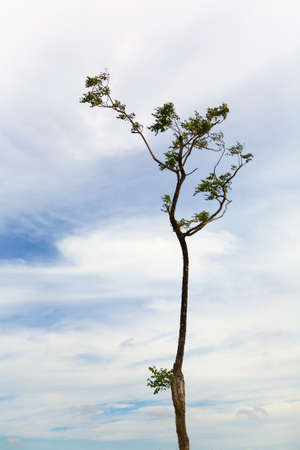 A tree with bizarre bends and the sky in the background. Thailand.