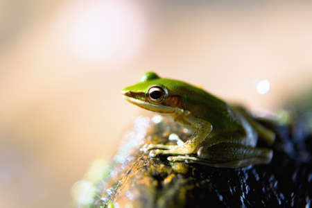 Exotic beautiful green frog and water splashes. Close-up. Stock Photo