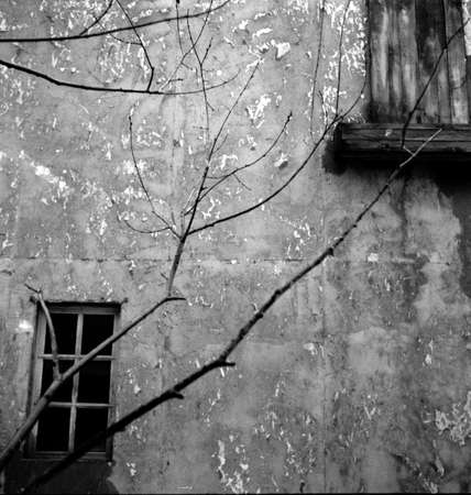 Old dilapidated wall with windows and branches of a tree. Attention! The image contains granularity and other artifacts of analog photography!