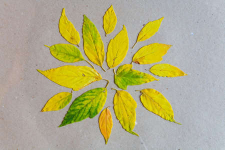 On the paper sheet lie the yellowed leaves. Autumn.