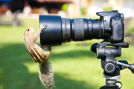 Funny palm squirrel looks into the lens of the camera. Humor and animals.